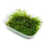 Moss In Container Portion