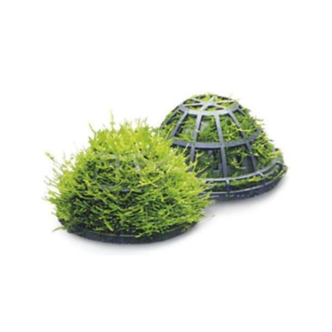 Moss Dome