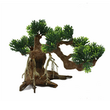 Bonsai Tree Wood