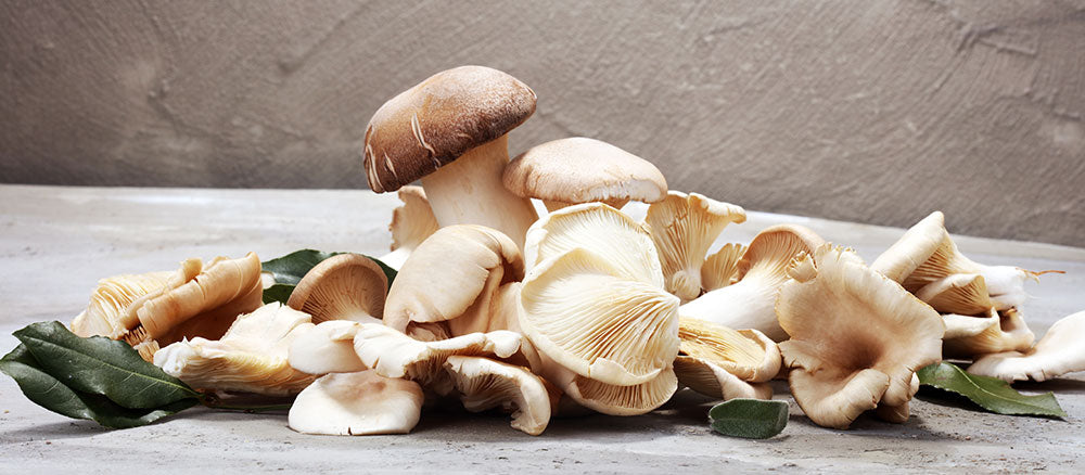 Mushroom Supplements, the Big Trend in 2020