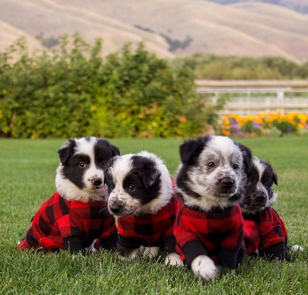 Dog Clothes | Flapjacks - Black/Red Checkered - Poshinate Kiddos
