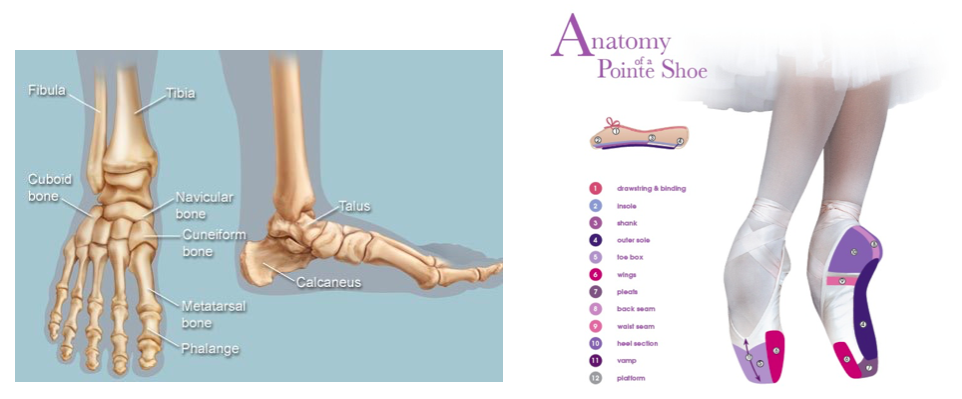 WHY FITTING A POINTE SHOE IS SO IMPORTANT – Dancique