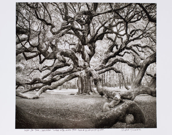 Angel Oak Tree - Photograph
