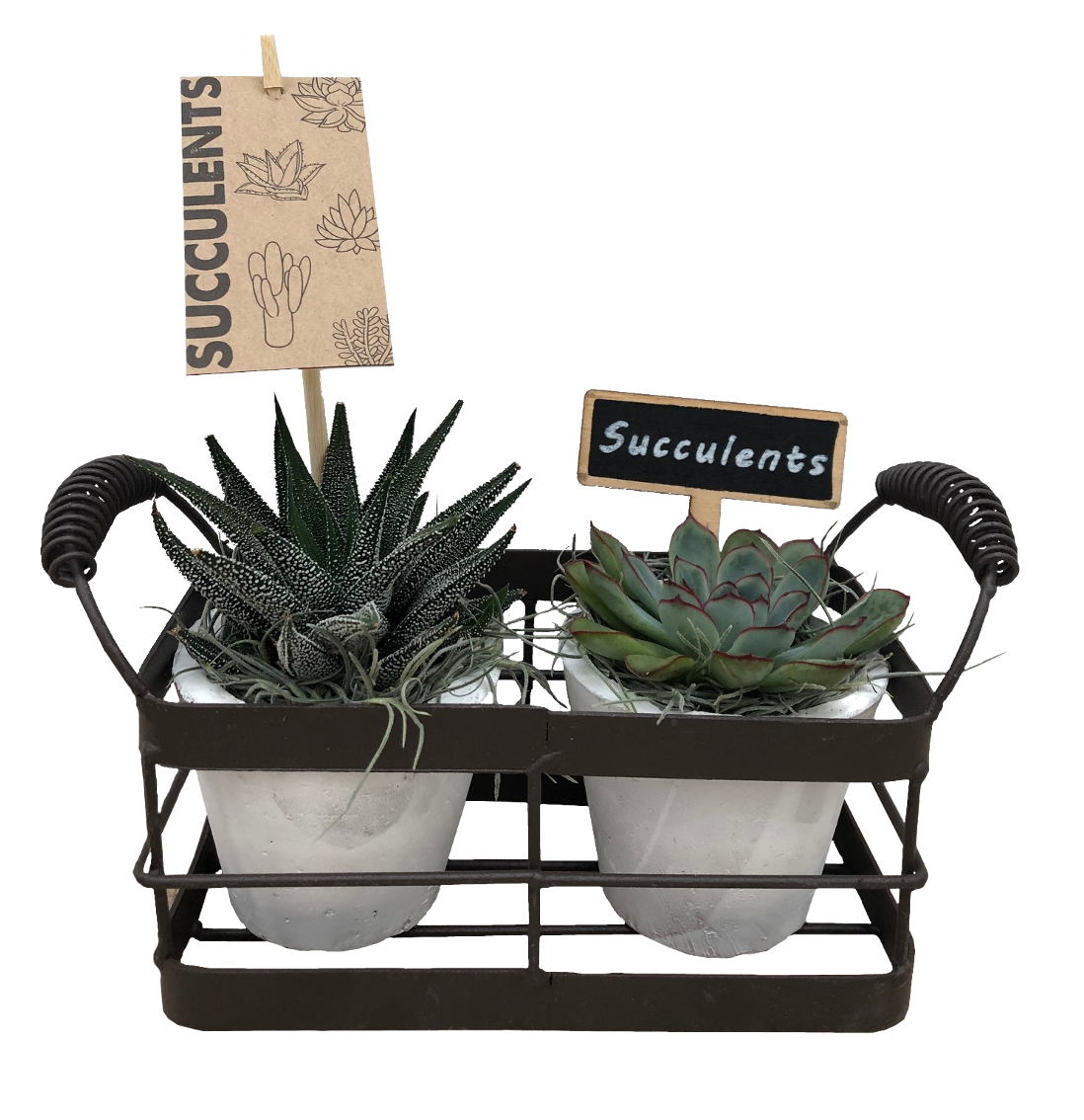 Metal Succulent Basket