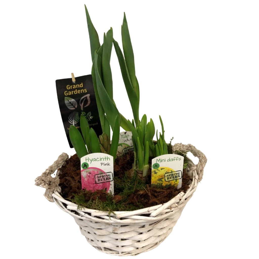 Wicker Spring Bulb Planter