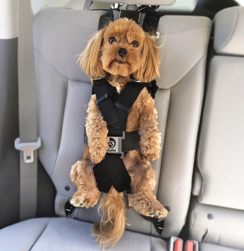 The Rocketeer Pack Multifunctional Harness Zugopet