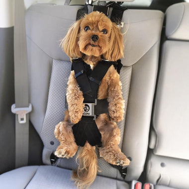 The Rocketeer Pack - Multifunctional Harness   zugopet