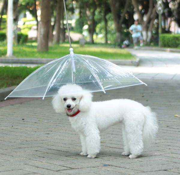 Transparent Waterproof Pet Dog Umbrella Raincoat With Leash