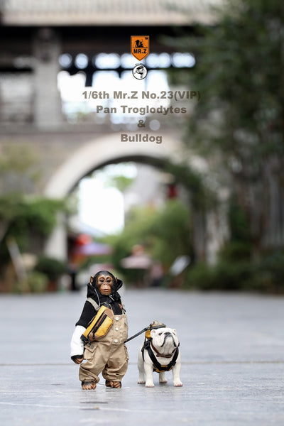 1/6 Scale Chimpanzee & Bulldog Figure Set by Mr.Z