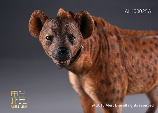 1/6 Scale Spotted Hyena Crocuta Crocuta Figure by Alert Line