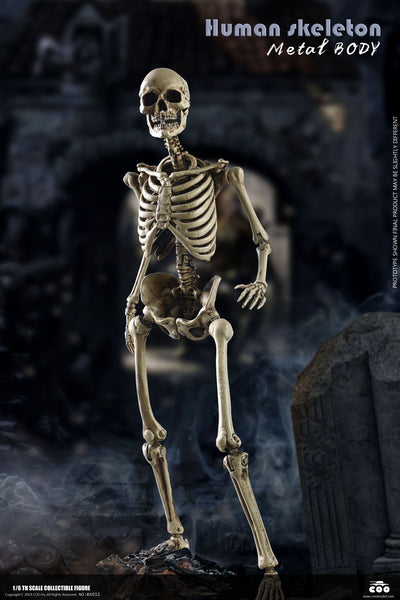 1/6 Scale The Human Skeleton Figure (Diecast Alloy) by COO Model