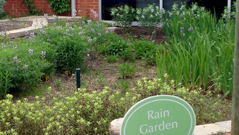 rain garden at Univ. of Tennessee, Knoxville