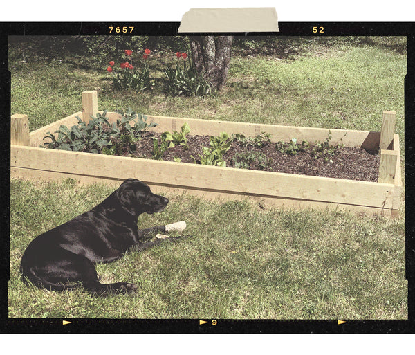 PNW Components Sales Manager TJ Trotter is planting a garden in his backyard during quarantine.