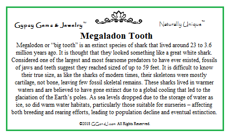 Megaladon Tooth fun facts on GGandJ.com Gypsy Gems & Jewelry Naturally Unique