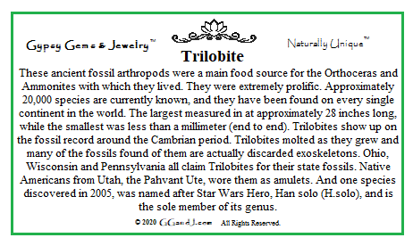 Trilobite fun facts GGandJ.com