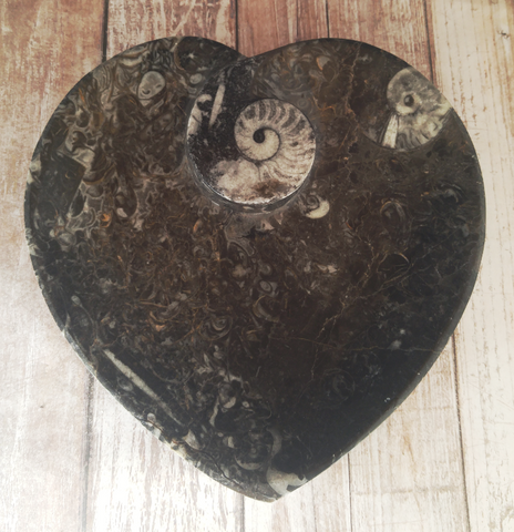 Orthoceras and Ammonite Fossil Heart Plate