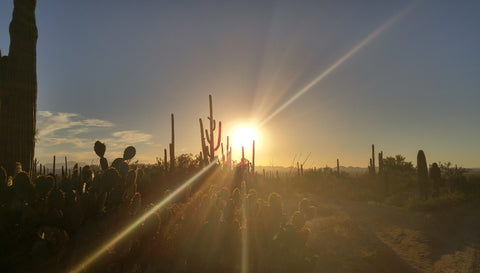 Sunset Saguaro National Forest