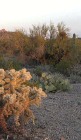 Cactus Landscape ; Desert Photography Collection by Heather Brown Gypsy Gems & Jewelry™ GGandJ.com