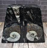 GGandJ.com Fossil Bookends from Morocco - Pair A