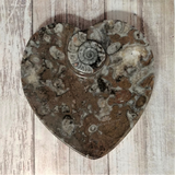 Orthoceras and Ammonite Fossil Heart Plates