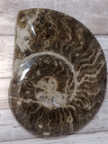 Ammonite Fossil for Sale on GGandJ.com Nautilus Fossil Gift 20 Million years old west africa gypsy gems & Jewelry Naturally Unique