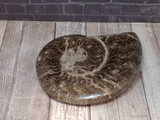 Ammonite fossil from Morocco on GGandJ.com