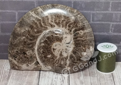 "6"" Ammonite Fossil from Morocco on GGandJ.com Gypsy Gems & Jewelry"