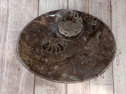 Ammonite fossil oval plate B on ggandj.com gypsy gems & jewelry