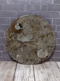 Ammonite fossil ying yang plate on ggandj.com gypsy gems & jewelry