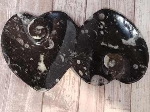 Ammonite fossil double heart plate on ggandj.com gypsy gems & jewelry