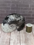 Large Ammonite with thread spool size reference