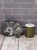 Ammonite fossil with thread spool size reference