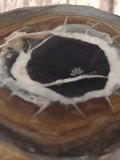 Close up of Septarian Eye Fossil Eye