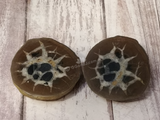 Septarian Nodule Pair with wood grain background