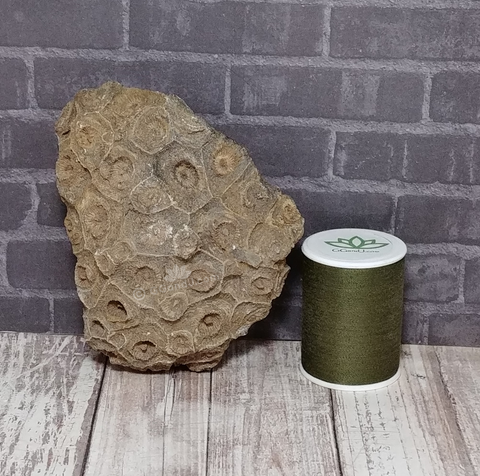 Coral Fossil with thread spool size reference
