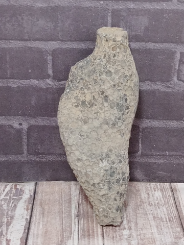 Rough coral fossil for sale on GGandJ.com