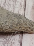 Finger style fossilized coral