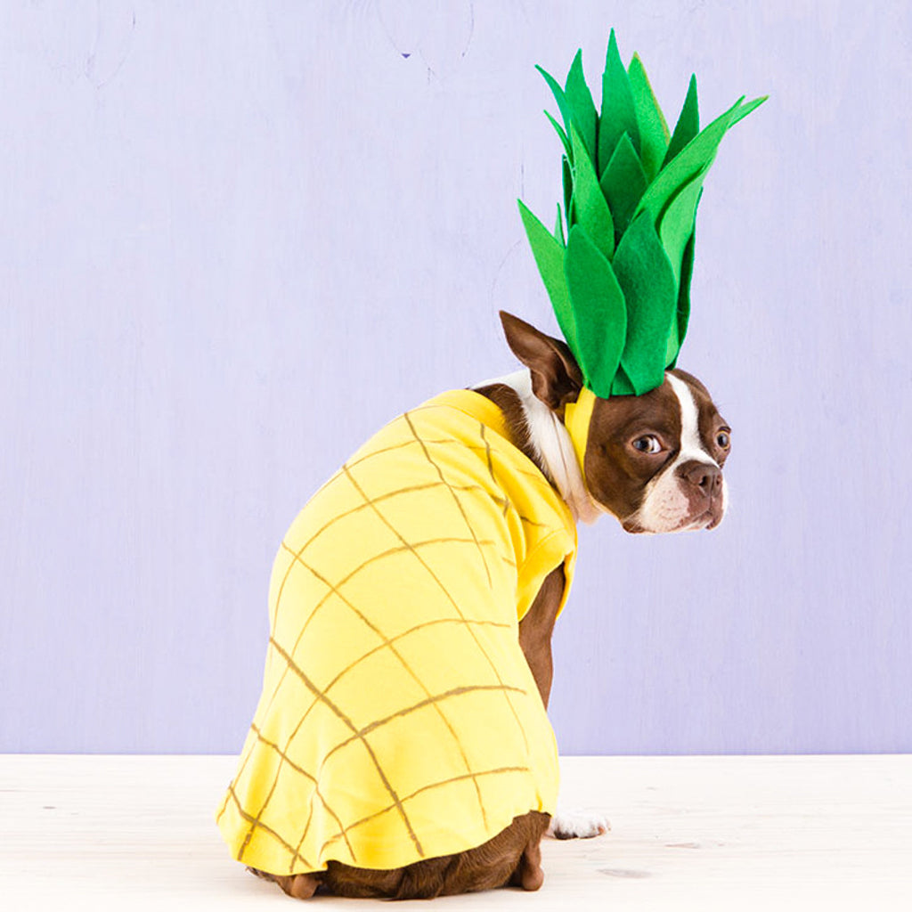 11 of the Best Dressed Dogs Ever + Win Your Favourite Dog Pin!