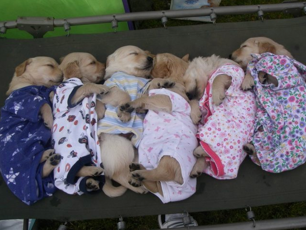 PYJAMA PARTY: 13 Pups That Are So Ready for Bed