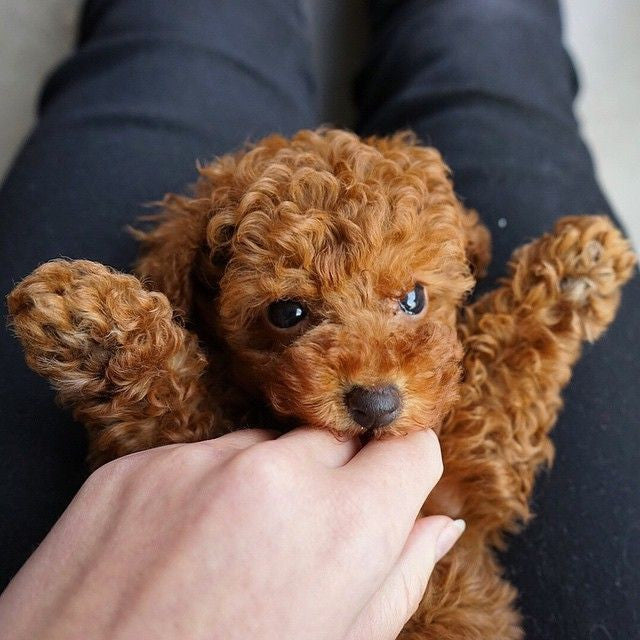 CUTE ALERT: 15 puppies to improve your day