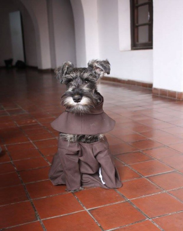 MONK MUTT: Meet the World's Cutest Friar