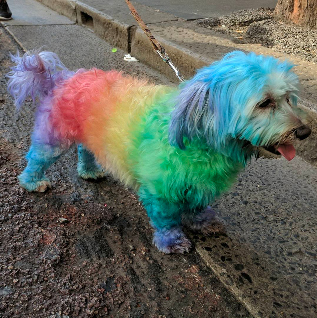 PAWS FOR EFFECT: Sydney's Dogs March for Marriage Equality