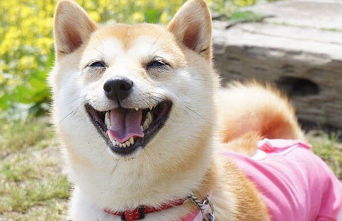 TOP 7 BEST DOG JOKES OF ALL TIME