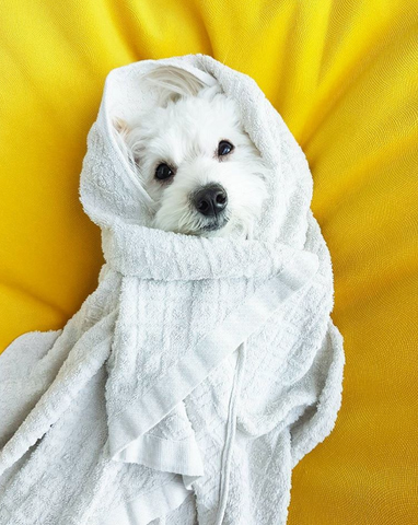 13 PUPPY BURRITOS YOU NEED TO SEE