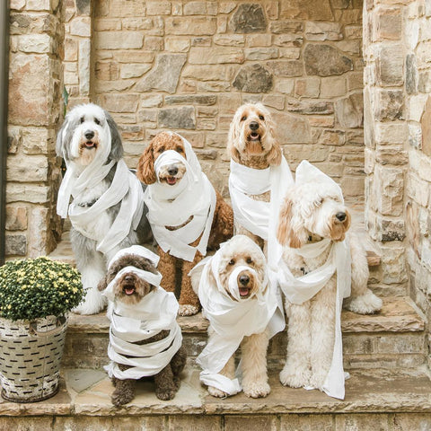HOWL-O-WEEN: The 10 Best Dog Costumes on Amazon