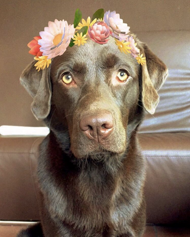 OH, SNAP: The Joy of Snapchat Filters on Dogs