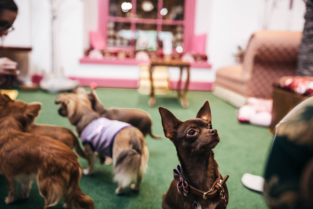 7 DOG CAFES AROUND THE WORLD