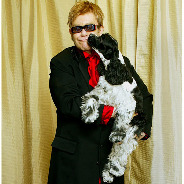 MUTT MUSICIANS: 11 Pop Stars & their Top Dogs