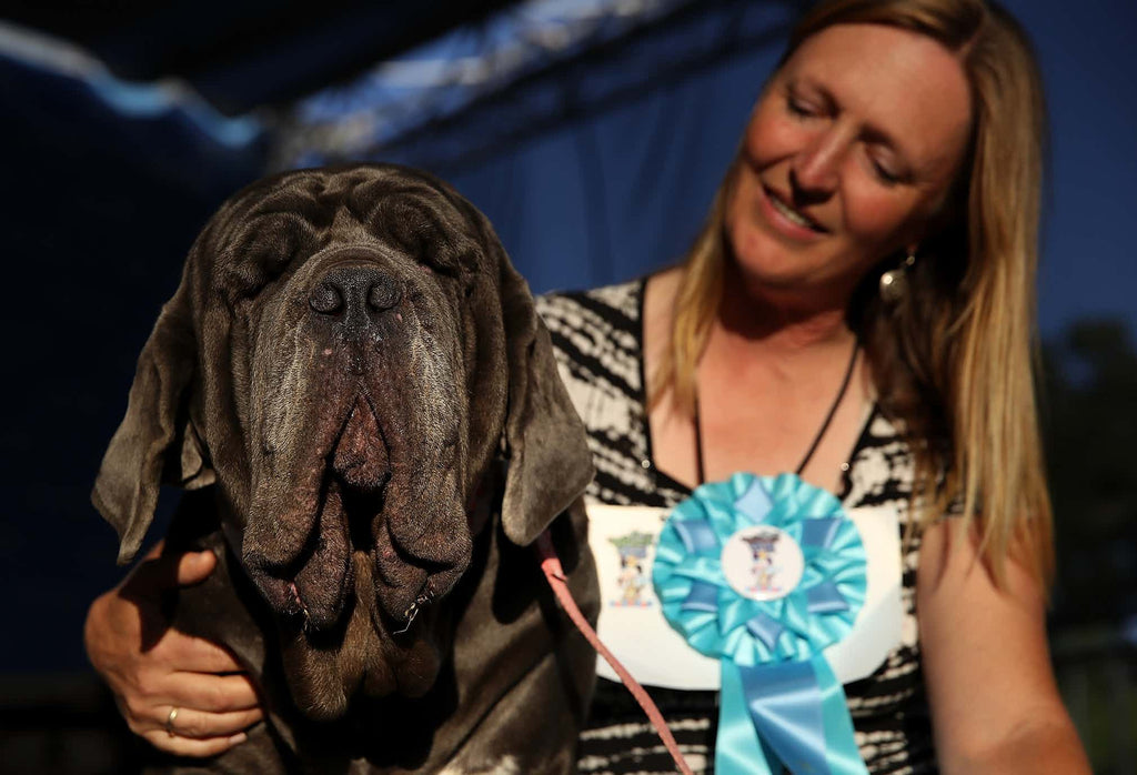 MUTT UGLY: Ugliest Dog in the World 2017