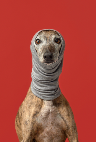 Five Human Outfits that have been Dog-ified